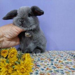 Кролики - Чистопородные крольчата с документами, 0