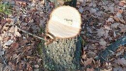 Рукоделие, поделки и товары для них - Очень полезный пень(ствол от дерева), 0