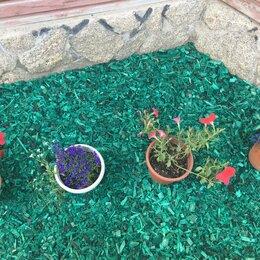 Субстраты, грунты, мульча - Щепа декоративная зеленая, 0