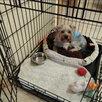 Новые Клетки для собак качественные российские по цене 3690₽ - Клетки, вольеры, будки , фото 7