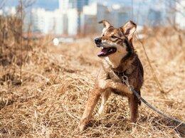 Собаки - Миниатюрная собачка ищет дом , 0