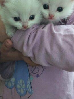 Кошки - 04 04 2021 родилис 2 кота отдам даром  , 0