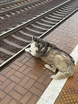 Животные - Нашлась собака в селе Павловском на станции , 0