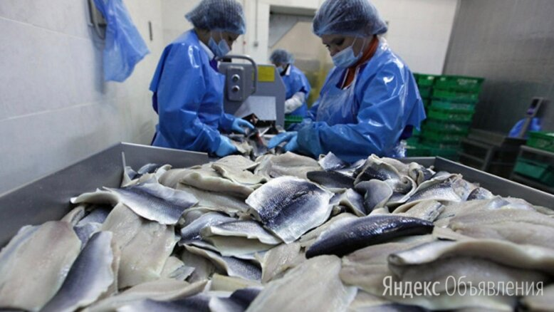 Упаковщики, стикеровщики рыбы (вахта в Москве) - Упаковщики, фото 0