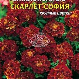 Виниловые пластинки - Бархатцы отклоненные Скарлет София ПЛ, 0