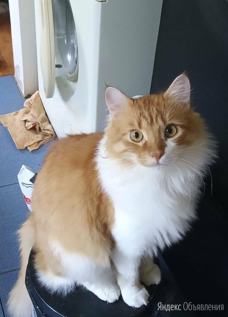 Потерялся кот по цене не указана - Животные, фото 0