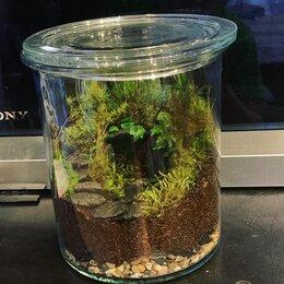 Комнатные растения - Флорариум с живым мхом «Домик гномика» , 0