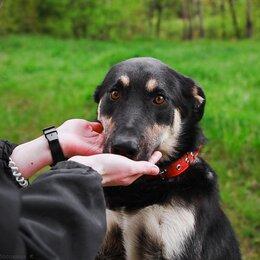 Собаки - Готов предложить свою лапу и сердце , 0