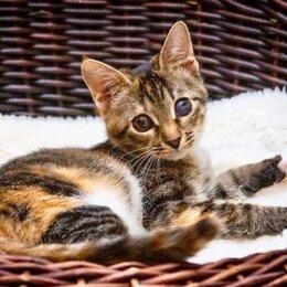 Кошки - Необычный котенок Стеша ищет дом., 0