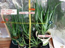 Комнатные растения - Алоэ Вера, в возрасте 2года, 3г., 4года, 4,5года, 0