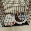 Новые Клетки для собак качественные российские по цене 3690₽ - Клетки, вольеры, будки , фото 1