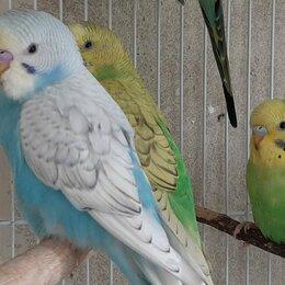 Птицы - Передержка Попугаев, 0