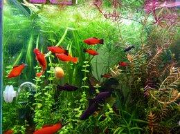 Аквариумные рыбки - Аквариумные рыбы, 0