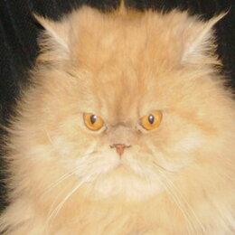 Услуги для животных - Коты-кошки на передержку., 0