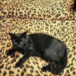 Кошки - Кошка. , 0