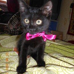 Кошки - Подарю котенка, 0