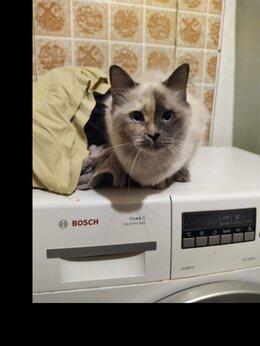 Кошки - Котёнок Кошка, 0
