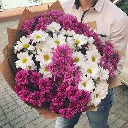 Цветы, букеты, композиции - Хризантемы, 0