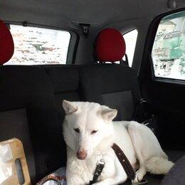 Собаки - Красавица Белка, 2-3 года, 0