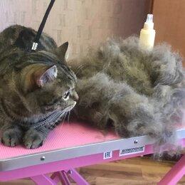 Услуги для животных - Стрижка собак и кошек. Экспресс линька., 0