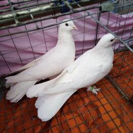 Птицы - Голуби, 0