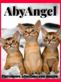 Кошки - Абиссинская кошечка , 0