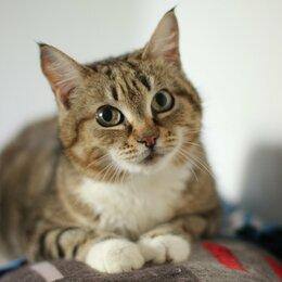 Кошки - Киса с кисточками на ушах, 0