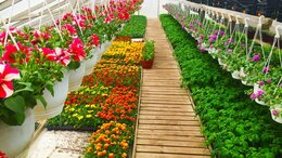 Разнорабочий - Разнорабочий в питомник садовых растений…, 0