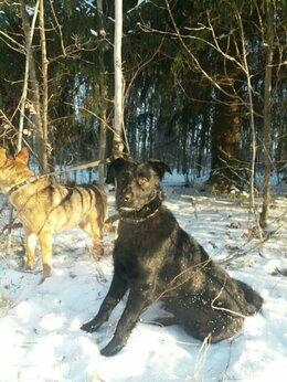 Собаки - Ищем хозяев Хану, 0
