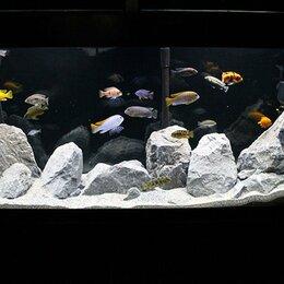 Бытовые услуги - Обслуживание аквариумов, 0