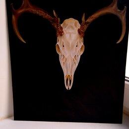 "Картины, постеры, гобелены, панно - ""Skull"", 0"