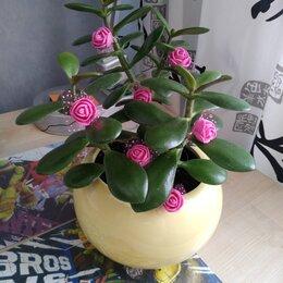 Комнатные растения - Денежное дерево , 0