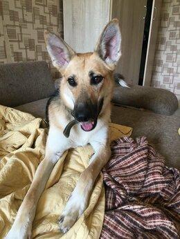 Собаки - Нежная, умная собака Фиона, 0