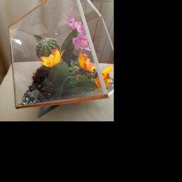 Комнатные растения - Флорариум суккуленты, 0
