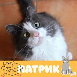 Кошки - Кот Патрик, 0