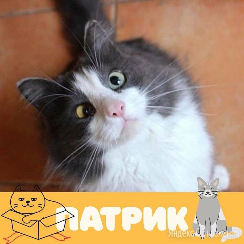 Кот Патрик по цене даром - Кошки, фото 0