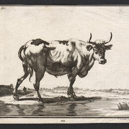 Гравюры, литографии, карты - Гравюра 1740 года с изображением Быка S24391, 0