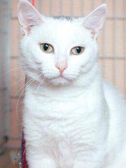 Кошки - Доверчивая, нежная и добрая киса Коала, 0