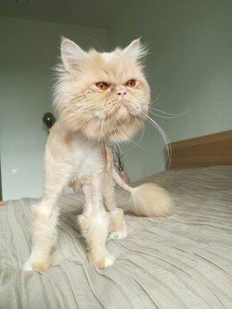 Кошки - Кот Леопольд ищет семью, 0
