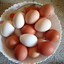 Продукты - Яйцо деревенское, 0