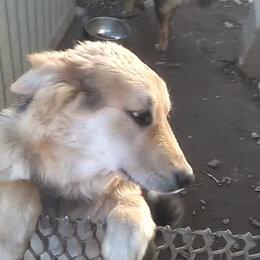 Животные - Пропал пёс.Фрунзенский р-н.Салова, 0