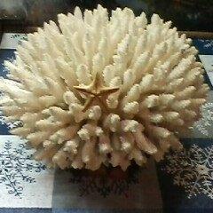 Декорации для аквариумов и террариумов - Коралл океанический натуральный, 0