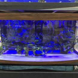 Аквариумы, террариумы, тумбы - Аквариум 600 литров панорамный. Новый. Гарантия 5, 0