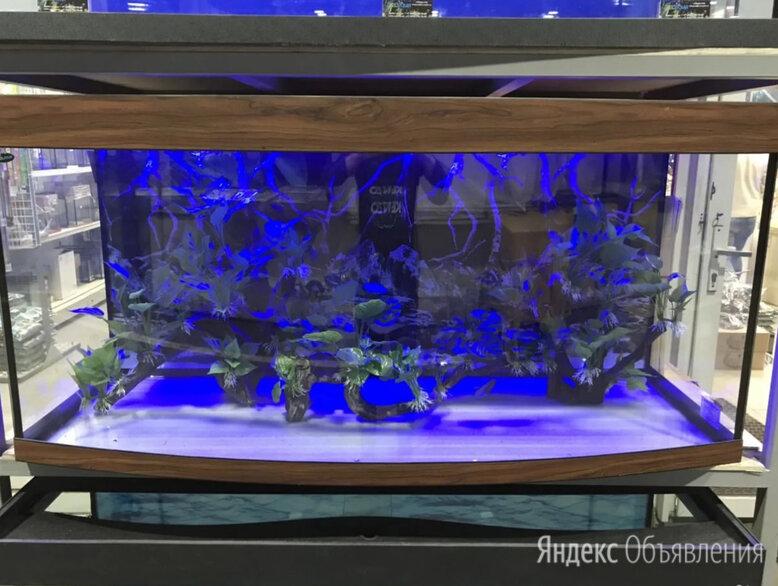 Аквариум 600 литров панорамный. Новый. Гарантия 5 по цене 32000₽ - Аквариумы, террариумы, тумбы, фото 0