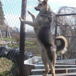 Собаки - Будущая охрана, 0