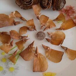 Семена - Семена кедра гималайского 20 шт., 0