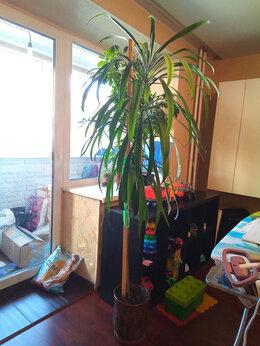 Комнатные растения - Цветок пальма, 0