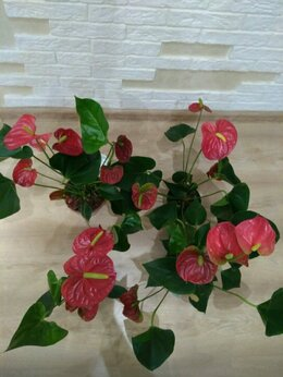 Комнатные растения - комнатные цветы, 0