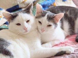 Кошки - Два ласковых братика акробатика ищут свободные…, 0