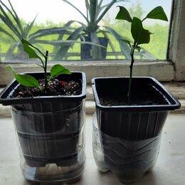 Семена - 🍋лимон пандероза, 0
